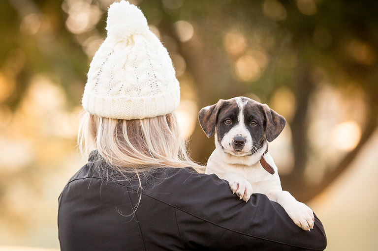 Rescue Collie X Puppy in New Zealand