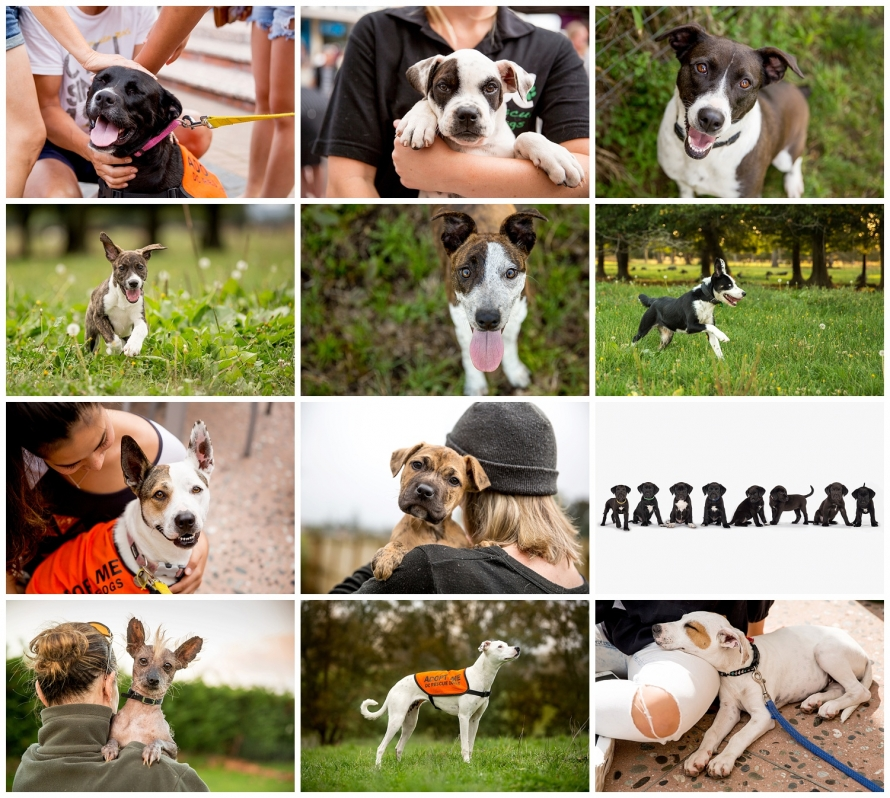 dc_rescue_dogs_waikato_auckland_new_zealand_1168