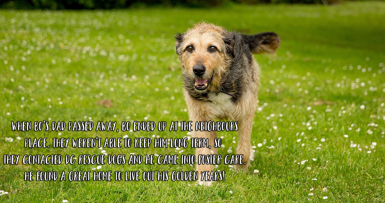 Rescued older dog in the Waikato New Zealand
