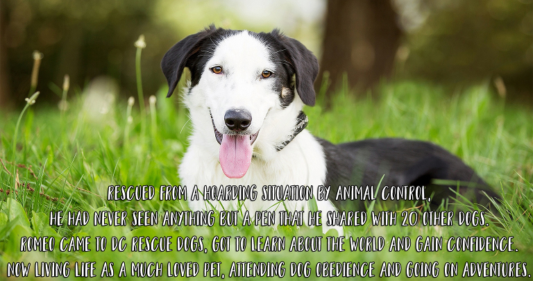 Dc Rescue Dogs Auckland